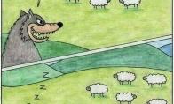 Kodėl vilkui vis nepavyksta pagauti avių?