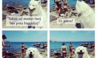 Žvalgyba su šunimi atostogų metu
