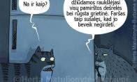 Katinai ir šaldytuvas