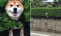 Gyvūnai, kurie užstrigo, bet apsimeta, kad jiems viskas ok