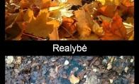 Medžių lapai