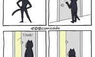 Moteris - katė