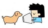 Šuo - šviestuvas