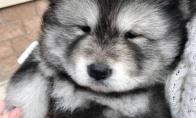 Mieliausių šuniukų konkurso nugalėtojai [GALERIJA]