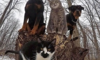 Smagios akimirkos iš gyvūnų gyvenimo [30 nuotraukų]