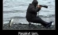 Neatidus fotografas