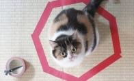 Katės - gyvūnai, kurie neturi logikos [GALERIJA]