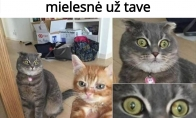 Kačių konkurencija