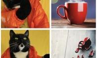 Katinų logika