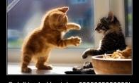Katino įspūdžiai po susidūrimo su dulkių siurbliu