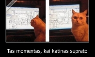 Kai katinas supranta tavo naštą
