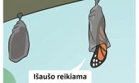 Kitoks drugelis