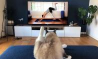 Rytinė joga