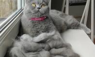 Kai po katės šukavimo kailio tiek daug, jog net gali pasidaryti iš jo pagalvę