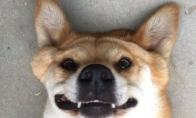 Kai retai šypsaisi