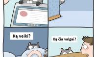 Katinų įkyrumas