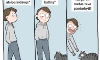 Kai eini pro katinuką