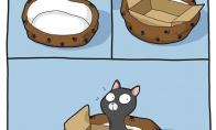 Kaip apgauti katiną
