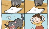 Svarbūs užrašai ir katinas