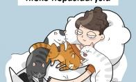 Kai augini kelis katinus namuose