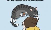 Katinas ir nemokamas maistas