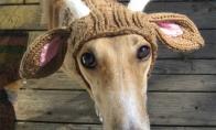 Gyvūnai megztomis kepurėmis [GALERIJA]