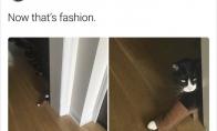 Katinai - komedijų meistrai [GALERIJA]