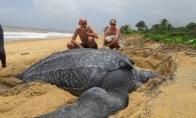 Šie gyvūnai norėjo būti išskirtinio dydžio [GALERIJA]
