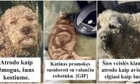 Smagios istorijos iš gyvūnų gyvenimo [GALERIJA]