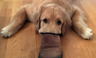 Šunys slepia snukučius batuose [GALERIJA]