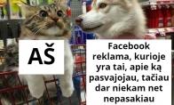 Fb reklamos galia