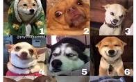 Šuo ir nuotaika