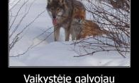 Vilkai ir lapės