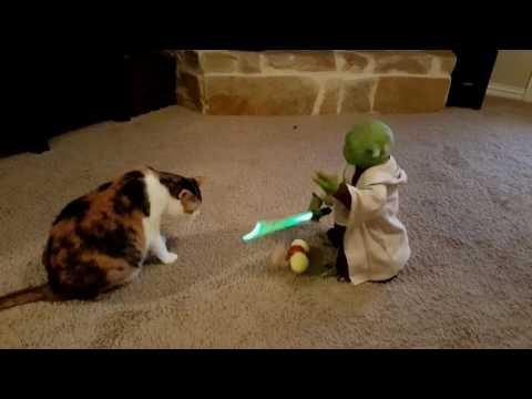 Katinas vs žaisliukas