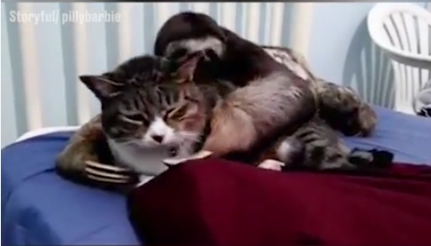 Tinginys myli katuką