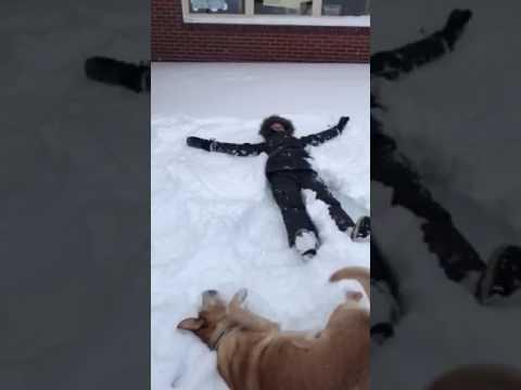 Šunelis irgi moka daryti sniego angelus