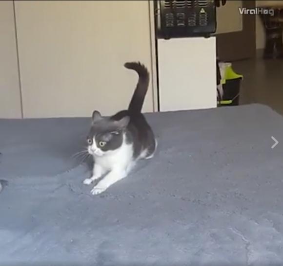 Katė ant katžolės