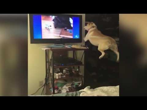 Šunelis nori žaisti su draugais televizoriuje