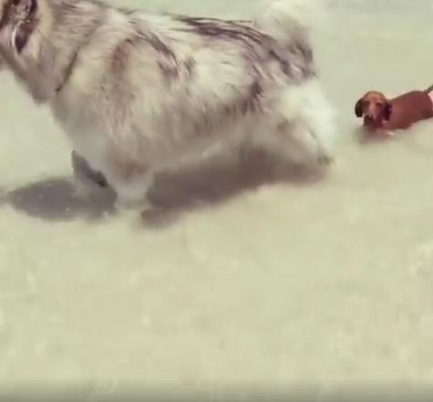 Mažų šuniukų problemos