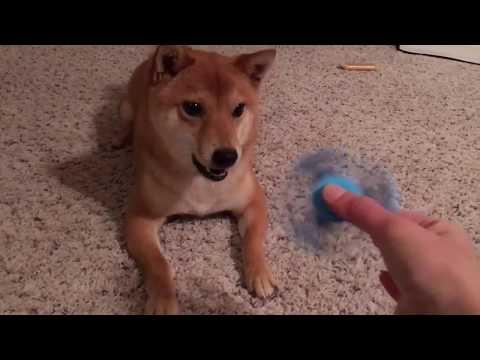 Šuniui nepatinka naujas žaisliukas