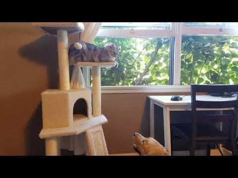 Katė pirmą kartą susipažįsta su šuniu