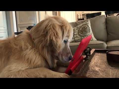 Šuneliui labai patinka voverių dokumentika