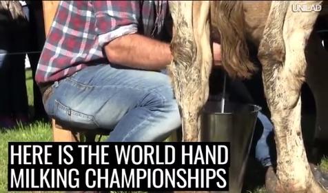 Pasaulio karvių melžimo čempionatas