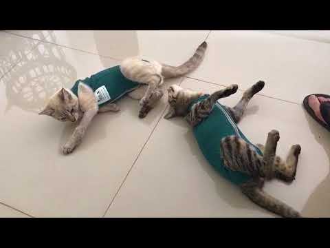 Katiniukams nepatinka naujos liemenės