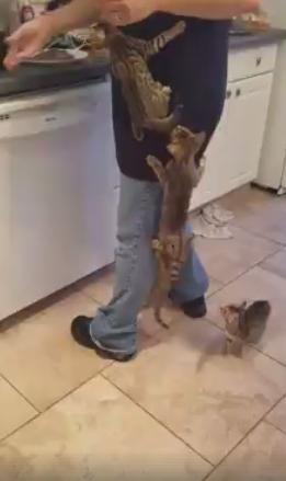 Alkani kačiukai