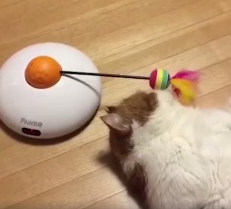 Tinginė katė, tingi žaisti