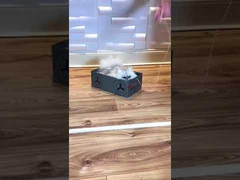 Katinas ir jo dėžė