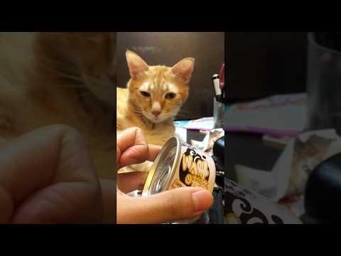 Katino reakcija į skardinės atidarymą