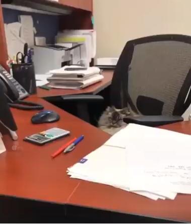 Surūgusi katė