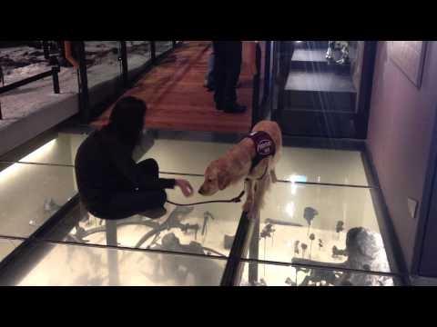 Šuo bijo stiklinių grindų